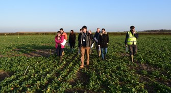 Growing oilseed rape this winter? Join a field lab to tackle flea beetle