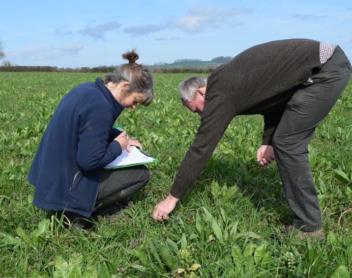 How do you grow the best herbal leys? Farmers will have the answer