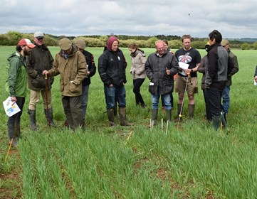 Farmers judging which wheat variety is performing best from the 22 planted -1.JPG